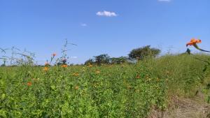 Land for sale Richmond Bulawayo North Bulawayo