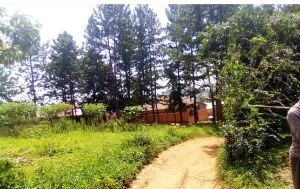 Land for sale Bujjuko Trading Centeer Mityana Rd Mpigi Central
