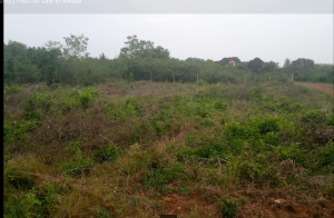 Land for sale Mabokoni Road Kwale County, Diani, Mombasa Diani Msambweni Kwale