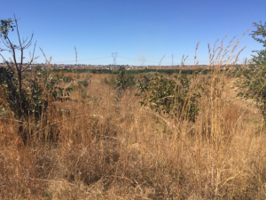 Stands & Residential land Land for sale Rockview Harare East Harare