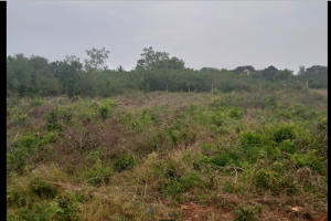 Land for sale  Kwale shimba hills  Msambweni Kwale