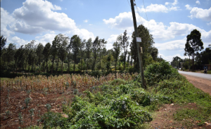 Land for sale Gikambura, Thogoto Kikuyu Kiambu