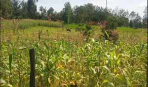 Land for sale Kemera Nyamira Borabu Nyamira