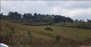 Land for sale - Limuru East Kiambu