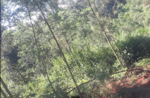 Land for sale Wangige Kikuyu Kiambu