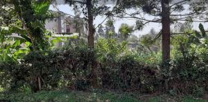 Land for sale Thindigua Theta Kiambu