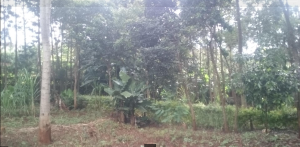 Land for sale Loresho Waithaka Nairobi