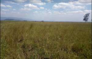 Land for sale Longonot Rd K Naivasha East Nakuru