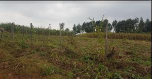 Land for sale - Ndenderu Kiambu