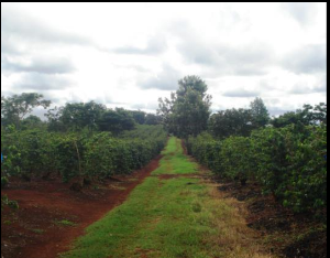 Land for sale Kiambu Kiambu Road Nairobi