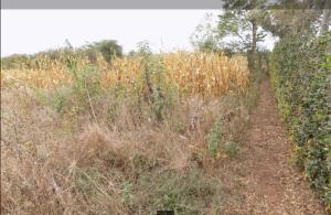 Land for sale - Thika Kiambu