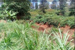 Land for sale Ruiru Kiambu