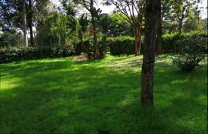 Land for sale Convent Lavingtone Nairobi