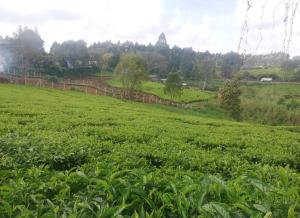 Flat&Apartment for sale Limuru, Tigoni Tigoni Limuru