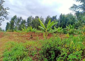 Farm for sale Embu Makuyu Highway, Kenol, Muranga Kenol Muranga