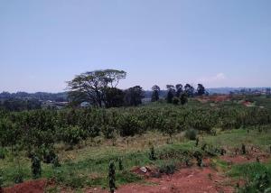 Land for sale Limuru, Limuru Limuru Limuru