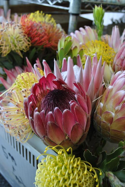 day-5-6-farmers-market-flowers