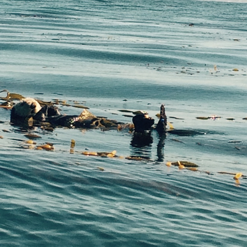 day-5-6-otters-monterey-bay