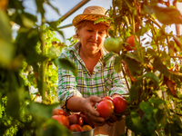 Source: Adobe Stock; Copyright: maryviolet / Adobe; URL: https://stock.adobe.com/ca/images/senior-woman-farmer-gathering-crop-of-tomatoes-at-greenhouse-on-farm-farming-gardening-concept/218125113?asset_id=218125113; License: Licensed by JMIR.