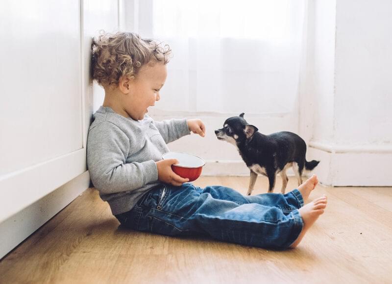Child feeding dog