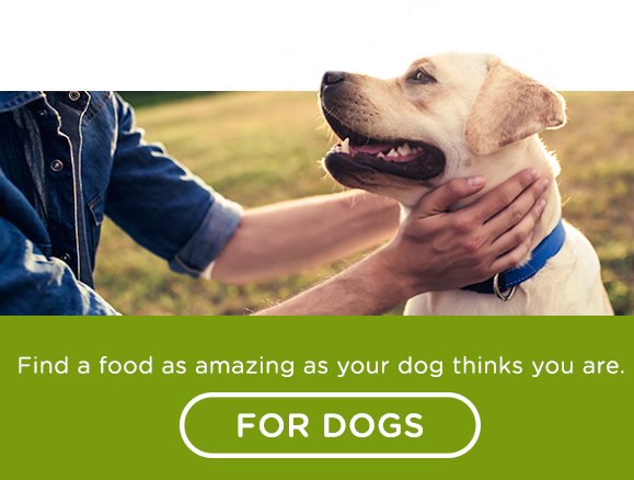 Find a food as amazing as your dog thinks you are.