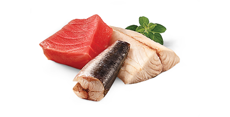 Ocean Fish & Tuna