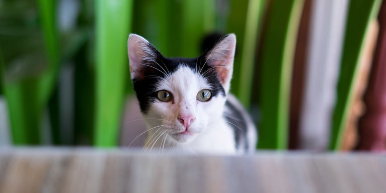 Expert Q&A: Cats and Protein