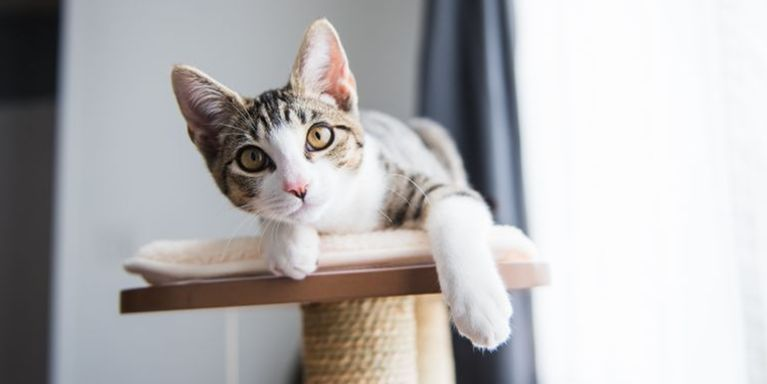 8 Signs Your Cat is in Tip-Top Health