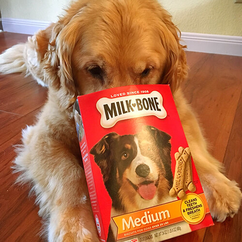 dog with nose in milk-bone box