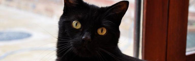 6 Fun Black Cat Facts