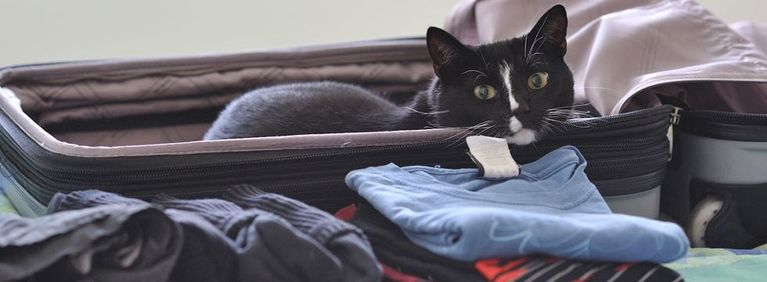 8 Tips for Traveling with Your Cat