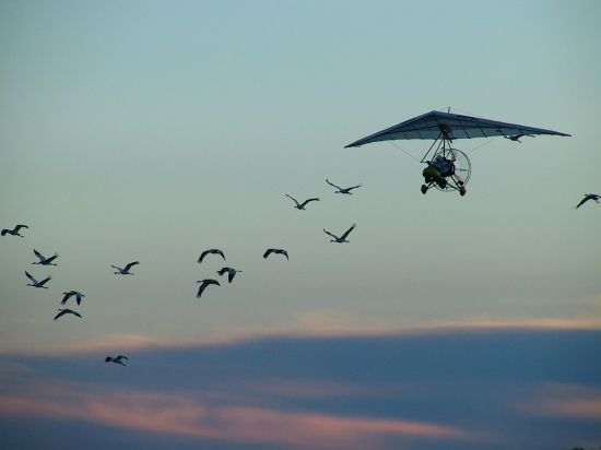 Whooping Crane Migration, Fall 2003