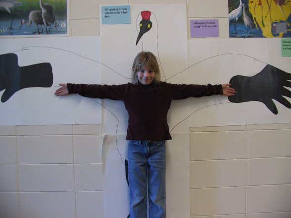 Third grader compares her arm span with the wingspan of a Whooping crane.
