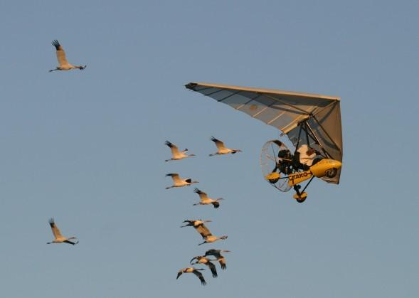 Whooping Crane Migration, Fall 2001