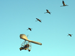 The chicks get scored on how well they follow the ultralight airplane.