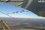 Ten cranes follow Richard's ultralight.