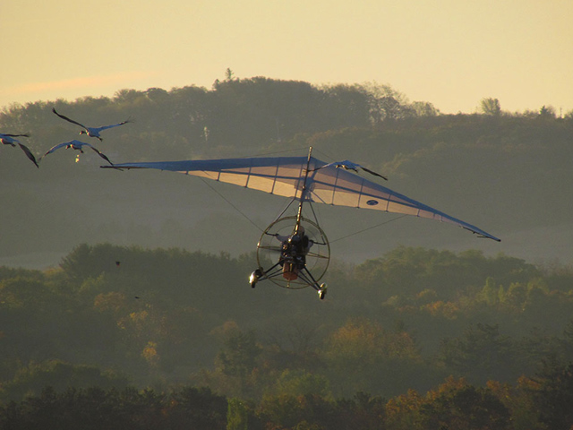 Ultralight plane takes off with young whooping cranes.
