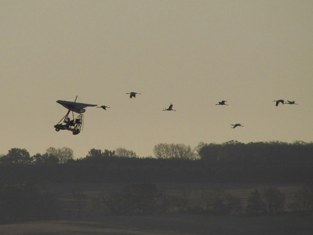 Young whooping cranes takeoff with ultralight airplane leading the way.