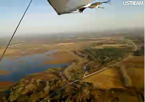 Whooping crane flies with ultralight plane.