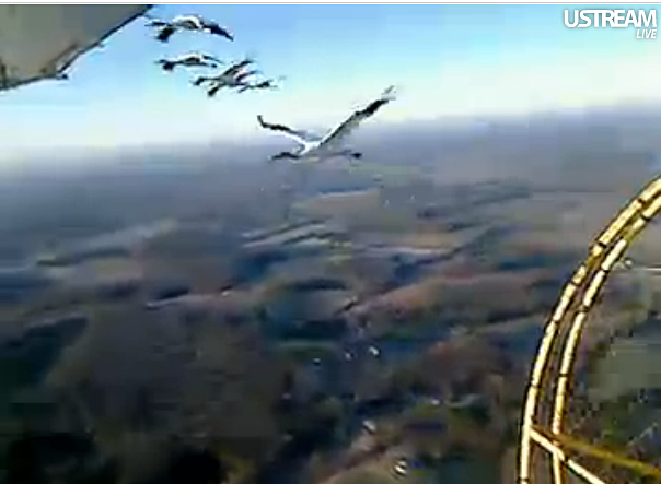 Young Whooping cranes follow ultralight aircraft on their first migration south.