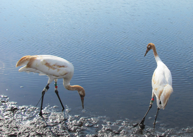 Discover the identity of the cranes in the Class of 2010 by looking