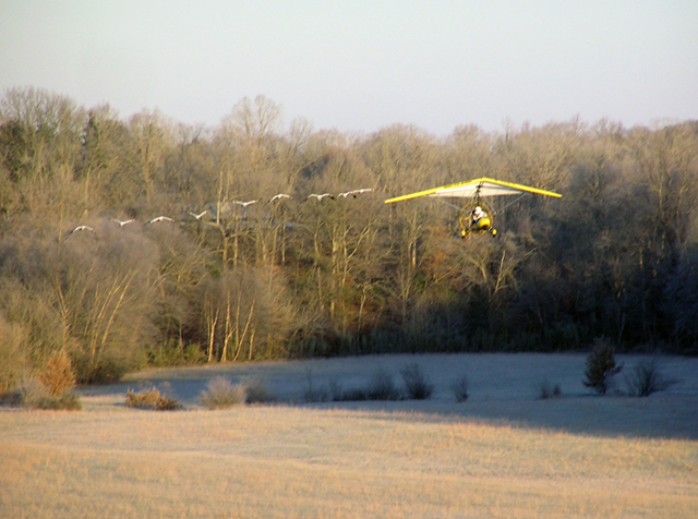 Ultralight plane leads nine young Whooping cranes out of Hardin County, TN.