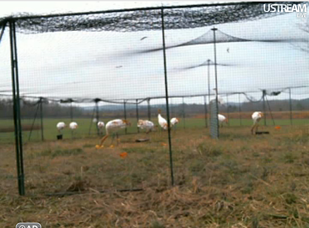 Class of 2011 in their travel enclosure on Dec. 13, 2011 in Alabama.