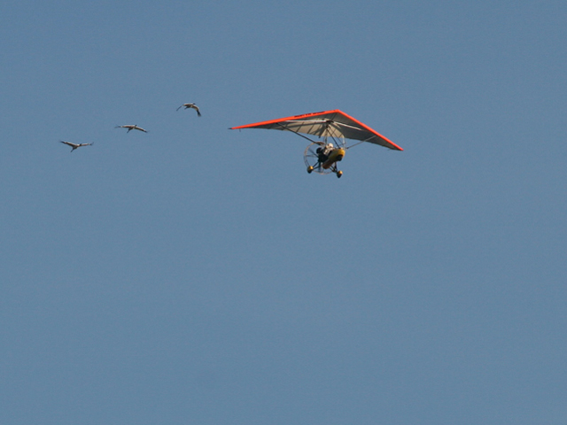 Richard's ultralight, airborne to lead young Whooping cranes.