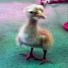 Baby crane #4-12