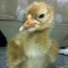 Baby crane #5-12