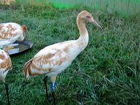 Crane 4 on September 19, 2012