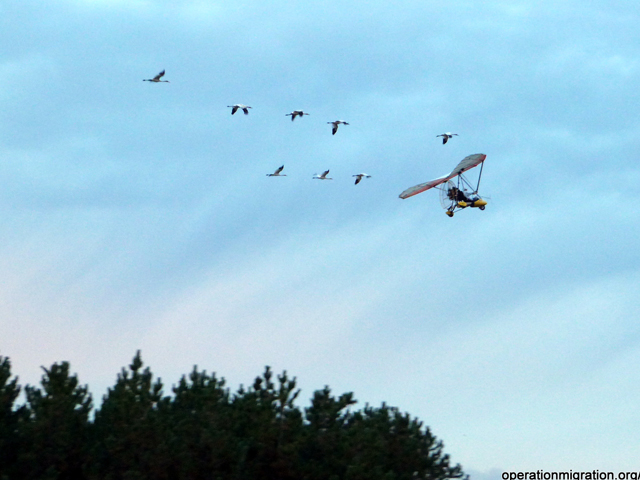 Eight young cranes takeoff with light aircraft Oct. 17, 2013