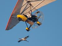 Crane #1 has Richard's wing all to herself on Nov. 3 flight.