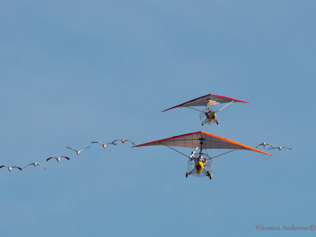 November 13 departure of whooping cranes and ultralights